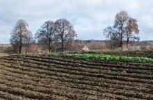 Siekiant narystės EBPO, Seimas švelnina ribojimus parduoti žemę užsieniečiams