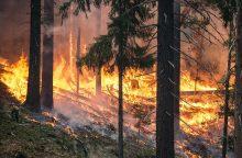 Sausra: beveik trečdalyje savivaldybių apribotas patekimas į miškus