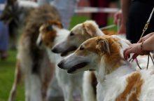 Renginių su gyvūnais organizatoriams – mažesnė administracinė našta