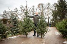Rinktis kalėdinės eglės – su visa šeima