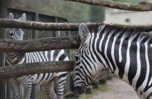 Sekmadienį – be galo magiškas zoologijos sodo sezono atidarymas