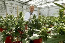 Prancūzija gali legalizuoti kanapes medicinos tikslais