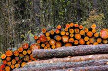 Miškininkai aptars miškų valdymo reformą