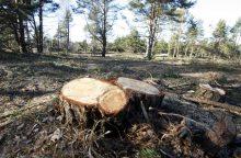 Masiniai miško kirtimai Kuršių nerijoje artėja prie pabaigos