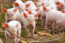 Europoje – paukščių gripo, mėlynojo liežuvio, afrikinio kiaulių maro ligų protrūkiai