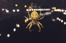 Iš kur atsiranda ir kur dingsta skraidantys rudens vorai?