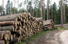 Seimo pirmininkas: neiškirstas miškas supūva
