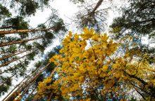 Keturiose savivaldybėse padidinti valstybinių miškų plotai
