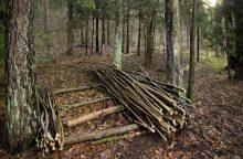 Miškininkų tikslas – stabdyti reformos buldozerį