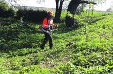 Įpareigojo žolę pjauti dažniau