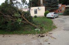 Avarija Šiaulių rajone: nulaužtas medis, sudaužyti automobiliai ir girti vyrai