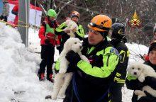 Lavinos nuniokotame Italijos kalnų viešbutyje rasti trys gyvi šuniukai