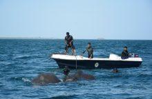 Šri Lankos karinis laivynas išgelbėjo du į jūrą nuneštus dramblius