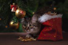 Išbandymas Kalėdų eglei – katė namuose