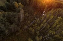 Norima vėl svarstyti draudimą įsigyti daugiau nei 1,5 tūkst. hektarų miško