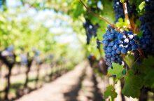 Juodkalnija: Rusijos draudimas importuoti vyną yra politinis