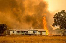 Kalifornijoje siaučiant miškų gaisrams iškilo pavojus 5 000 pastatų