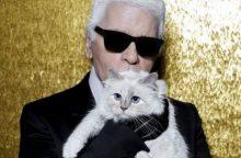 K. Lagerfeldo katė gali paveldėti milijonus