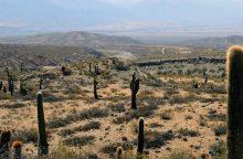 Meksikoje kaktusai tampa energijos šaltiniu
