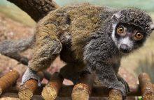 S. Paltanavičius: ar sunku šiais laikais atrasti visai naują gyvūnų rūšį?