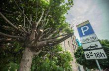 Miesto centre – medžiai tarsi po karo