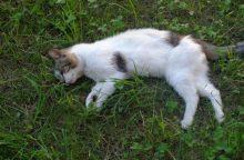 Neįtikėtinas žiaurumas: moteris vieną katiną pakorė, šešis – paskandino <span style=color:red;>(papildyta)</span>