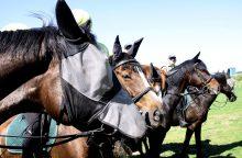 Aukcione išparduodami tarnybą baigę policijos žirgai