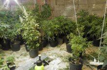 Kriminalistų laimikis – kanapės ir jų auginimo laboratorijos